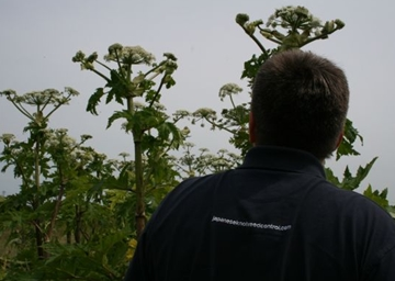 Giant Hogweed Removal Professionals