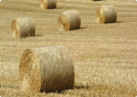 Equine Fodder Suppliers In Bexhill