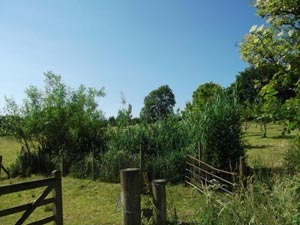 Reedbed Design and Build