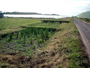 Household Reedbed Systems