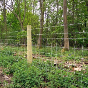 Barbed wire with stock fence