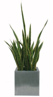Artificial Sanserveria, Mother In Law's Tongue Plant - 62cm, Green