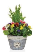 Artificial Cedar and Pansy Planter - Purple and White