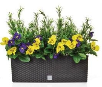 Artificial Pansy and Podocarpus in Rato Trough - 53cm, Orange/Yellow Pansies in Black Trough