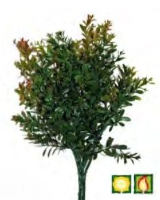 Artificial Foliage Buxus FR UV - 43cm, Green/Red