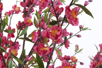 Artificial Blossom Tree in Pink