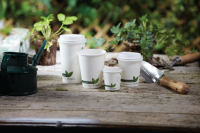 Biodegradable PLA Lined White Paper Hot Cups For Carnivals