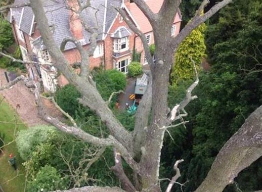 CHESTER TREE & STUMP REMOVALS/CHESTER TREE SURGEON