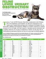 CS Feline Lower Urinary Obstruction